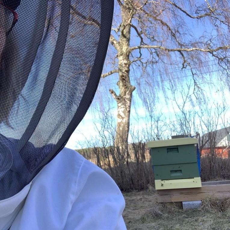 Äntligen i bidräkten igen Foto: Monique Widingsjö